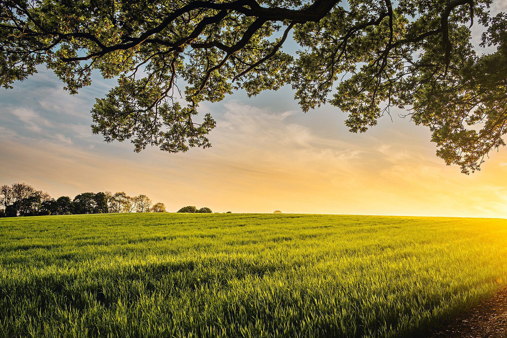 you are so loved sunset grassy field